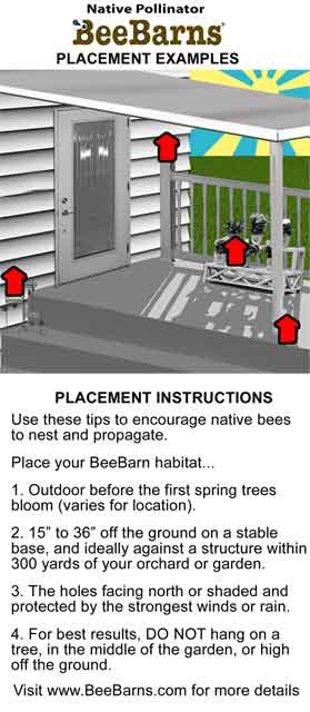 how to keep carpenter bees away from my house